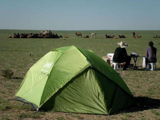camping near camels