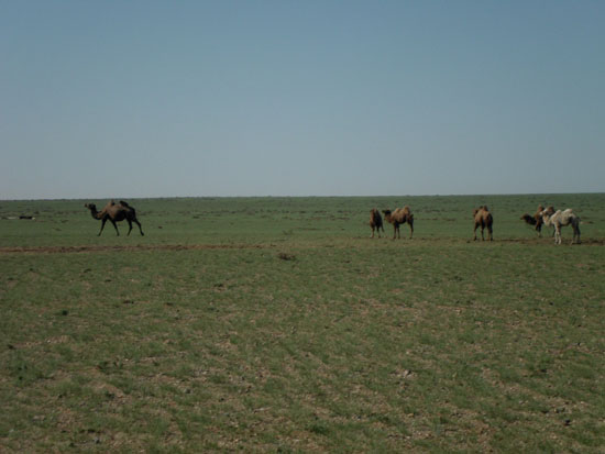 immensity in gobi